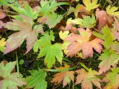 00_colored_leaf.JPG