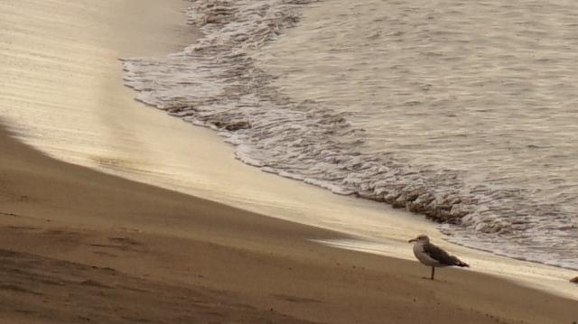 beach0909_2.JPG