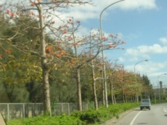 花の咲いた木