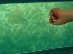 サンゴの子供?