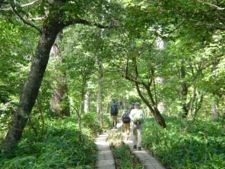 森の中の木道