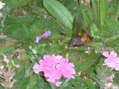沖縄のハチ?