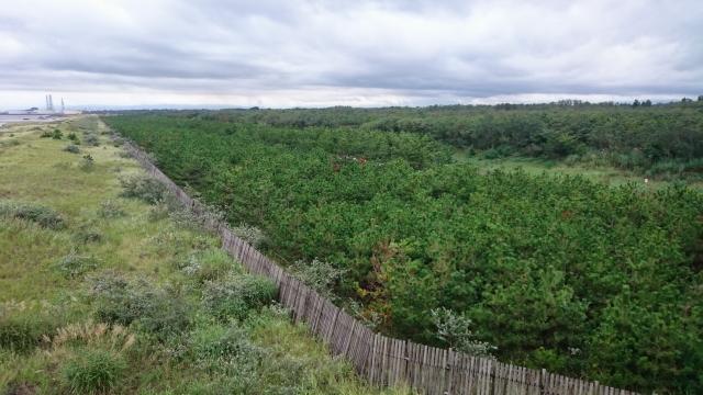 seasideforest1.JPG