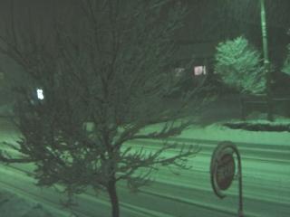 街灯のせいで緑色