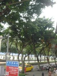 道路の並木はやっぱり沖縄に似てる